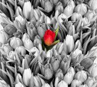 A piros virág