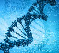 Az emberi DNS, és mi, emberek
