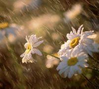 Májusra az eső…